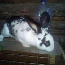 Кролик, в Камне-на-Оби