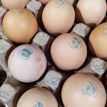 Инкубационное яйцо РОСС 308, в г.Одесса
