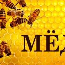 Мёд из леса!, в Тарусе