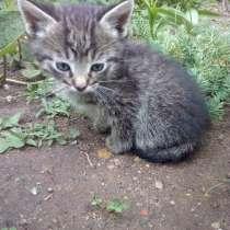 Котята в дар, в г.Молодечно