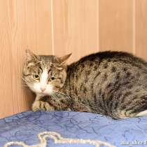 Молодой котик Шерлок ищет дом, в Москве