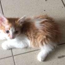 Рыжий котенок ищет дом и заботливых хозяев, в Сочи