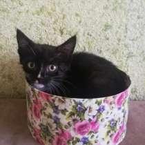 Котенок бесплатно, в Новокузнецке