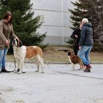 Общий курс послушания и ринговая дрессировка собак, в Новосибирске