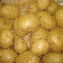 Картофель ранний, в Самаре