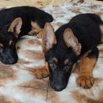 Продам щенков в очень добрые руки!!!, в г.Бишкек