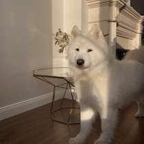 Куплю щенка :), в г.Нурмиярви