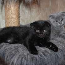 Продажа котят, в Нижневартовске