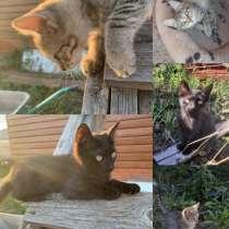 Котят в добрые руки, в Набережных Челнах