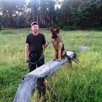 Дрессировка собак инструктором служебного собаководства, в Самаре