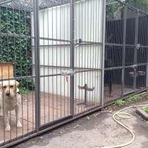 Зоо гостиницы для животных на КМВ, в Пятигорске
