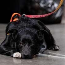 Одинокий пес Бруно ищет дом, в Москве