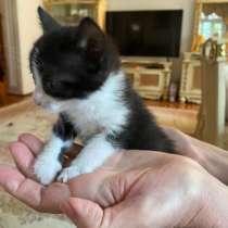 Отдаются котята в добрые руки, в г.Баку