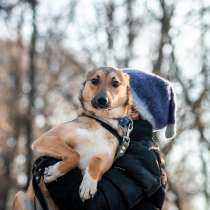 Приютская собачка малышка Мия ищет дом, в Москве