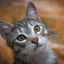 Котик Басенька в добрые руки!, в Москве