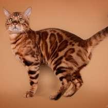 Бенгальские котята, в г.Аникщяй