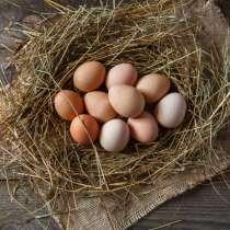 Яйца домашние, в Королёве