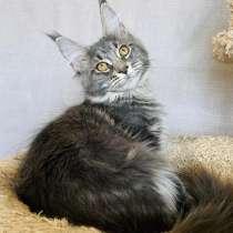 Кошечка Мейн кун, в Лобне