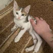 Отдам котят в хорошие руки, в Новокузнецке
