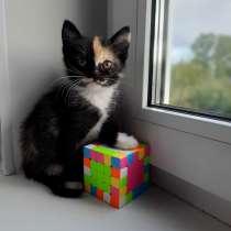 Котята, в Коврове
