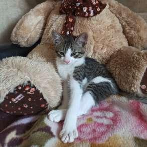 4-е котика СРОЧНО ищут себе дом!!!, в г.Минск