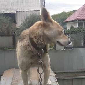 Отдам беспородистую собаку зать Гэта, в Новокузнецке