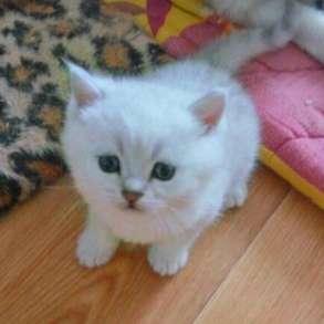 Котик Поль, в Санкт-Петербурге