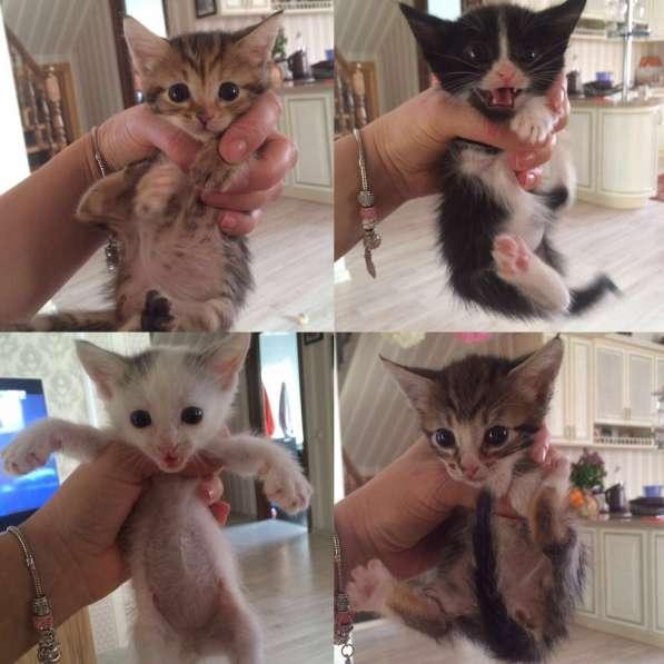 Милые котята даром