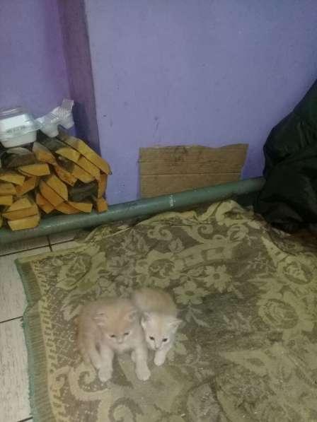 Котята в Кемерове