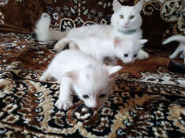 Отдам даром котят в Севастополе фото 4
