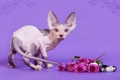 Волшебный котёнок сфинкс с другой планет в фото 7
