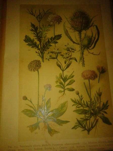 Ботанический атлас по системе Де-Кондоля 1899 в