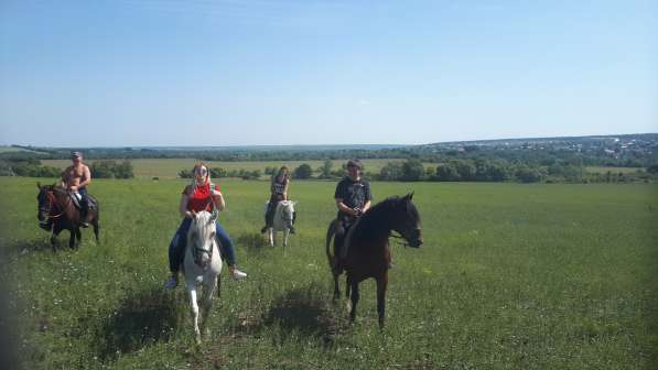 Конные прогулки в поля в Воронеже фото 7