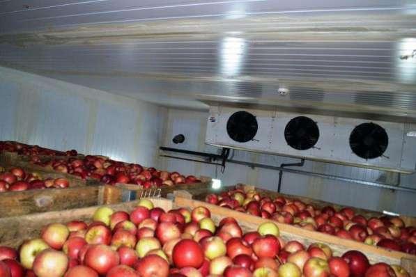 Монтаж холодильных камер для хранения яблок в Крыму.