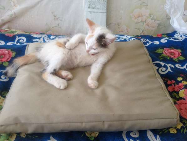 Подстилка из сена для собак и кошек