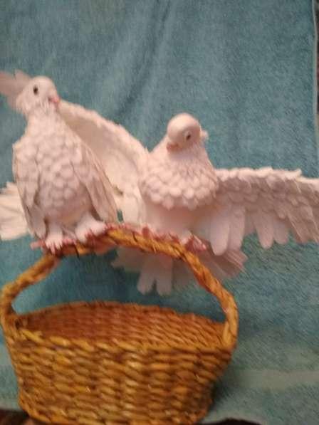 Свадебные голуби в Челябинске