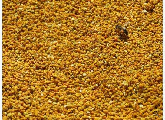 Пыльца с собственной пасеки