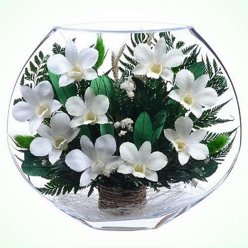 Орхидеи белые