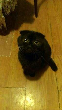 Пропала кошка!