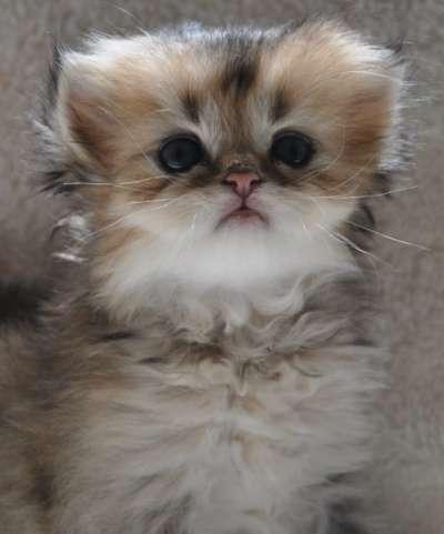 Удивительные котята