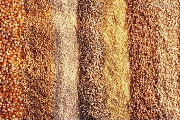 Пшеница твёрдых сортов