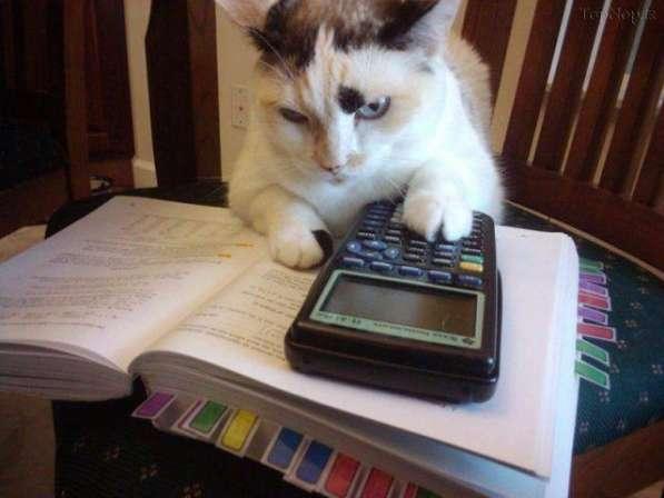 Ведение бухгалтерии дома. Отчеты для ООО, ЧП