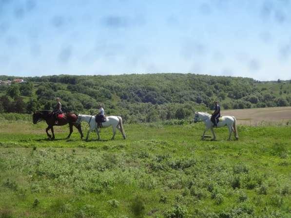 Конные прогулки в поля в Воронеже