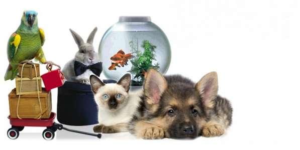 Поиск поставщиков товаров для животных
