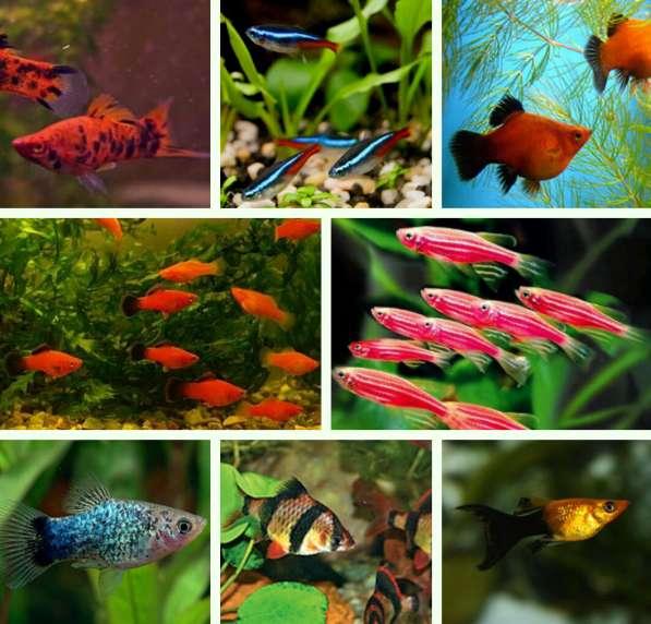 Мирные рыбки для Вашего аквариума