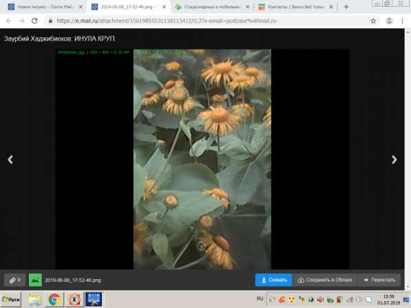 Саженцы и семена в Краснодаре фото 3