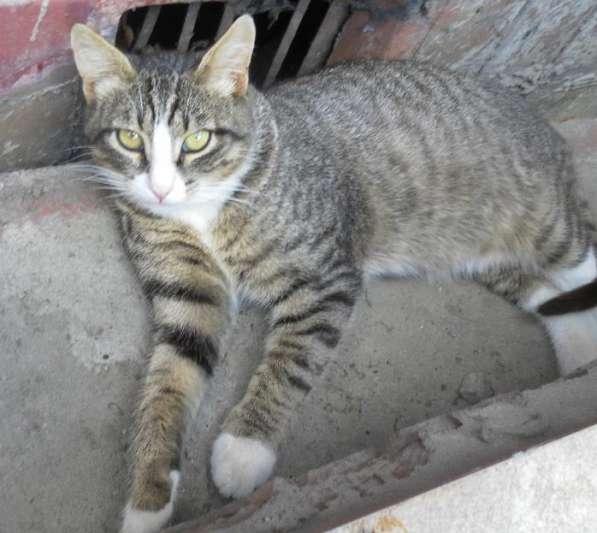 Котик Грациозно сложённый. 7 месяцев