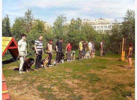 Дрессировка собак в вашем городе! в Москве фото 3