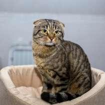 Молодой вислоухий домашний котик Багет ищет дом и доброе сер, в г.Москва