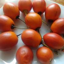 Цифомандра свеклолистая - томатное дерево, в г.Высокое